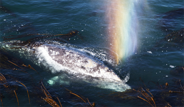 whale-rainbow.png